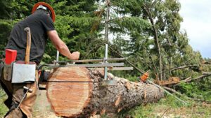 Best Chainsaw Mill Reviews